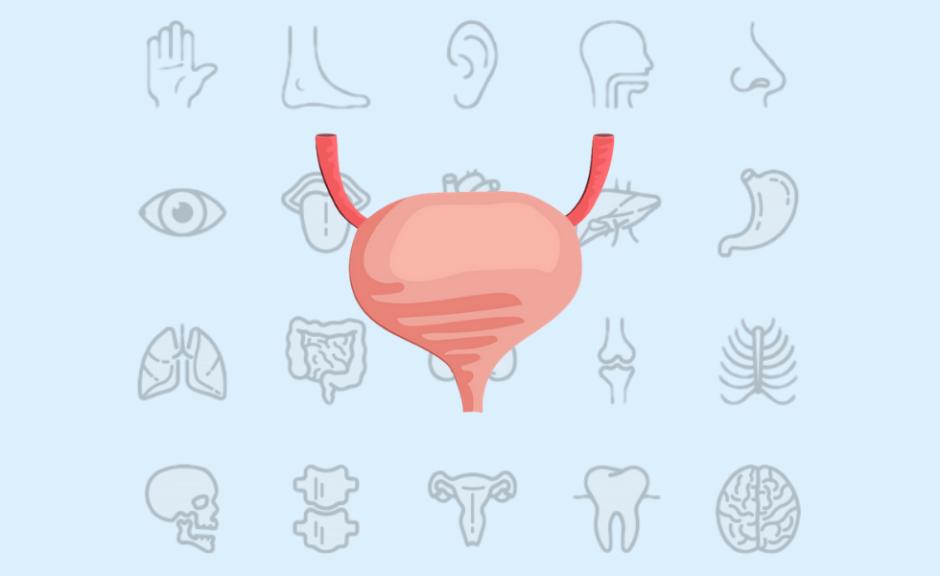 泌尿器科の仕事内容と給料